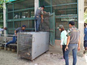 Hua Hin Zoo: mehrere Wildtiere ohne Registrierung beschlagnahmt