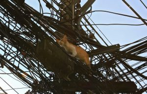 epa05117861 A stray cat makes its way across the street using tangled power, cable TV and telephone lines as an elevated roadway above the dangers of the traffic, in Bangkok, Thailand, 22 January 2016. Tangled power, telephone and cable TV lines run along and across every street in the Thai capital.  EPA/BARBARA WALTON