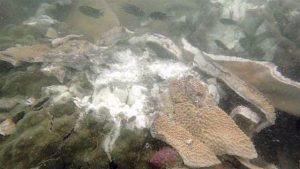 Chonburi: Frachter aus Panama zerstört über 3000 m² eines Korallenriffs  Chonburi: Frachter aus Panama zerstört über 3000 m² eines Korallenriffs