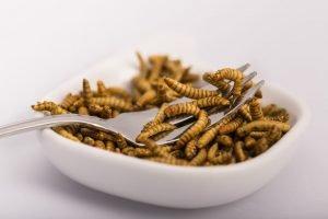 Insekten-Nahrung findet langsam den Weg nach Europa