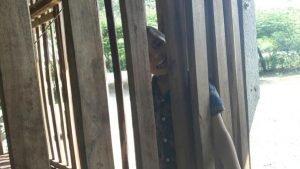 Krabi: Vater sperrte Sohn 5 Jahre lang in einen Holzkäfig