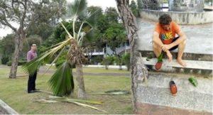 Krabi: Deutscher wegen Zerstörung von Bäumen verhaftet