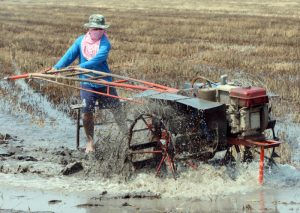 epa01658687 A photo made available on 08 March 2009 shows a Thai farmer working in a paddy field ahead of planting rice in Nakhon Pathom province, Thailand, 07 March 2009. Thai rice exports in February 2009 dropped by 40 per cent to 634,116 tons from 1.04 million tons last year while the country's milled rice production is forecasted at 18.8 million tons this year, up from 18.6 million in 2008, according to the Commerce Ministry. Thailand is the world's largest rice exporter.  EPA/RUNGROJ YONGRIT